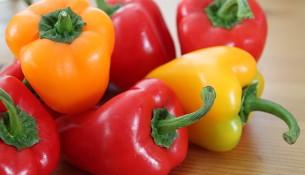 pěstování papriky