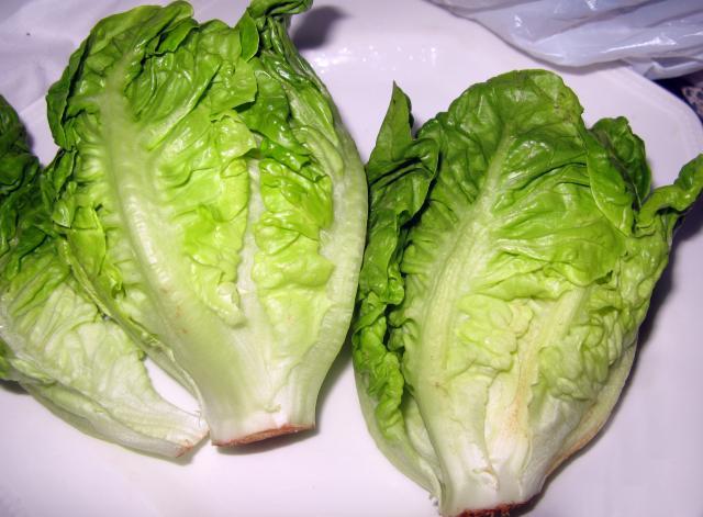 salát římský Lactuca sativa L. var longifolia
