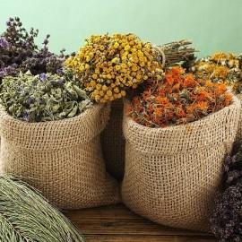 sušené bylinky a zdraví