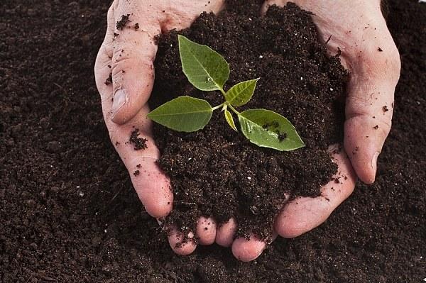 jak zjistit kvalitu půdy