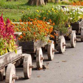 podzimni-kvetiny
