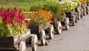 podzimní květiny na zahrádce
