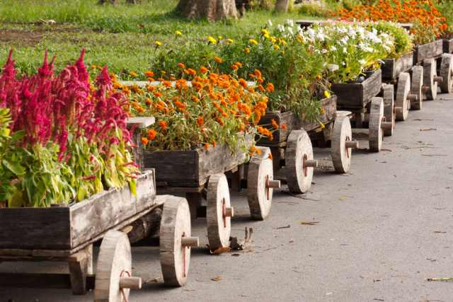 podzimní květiny na zahradce