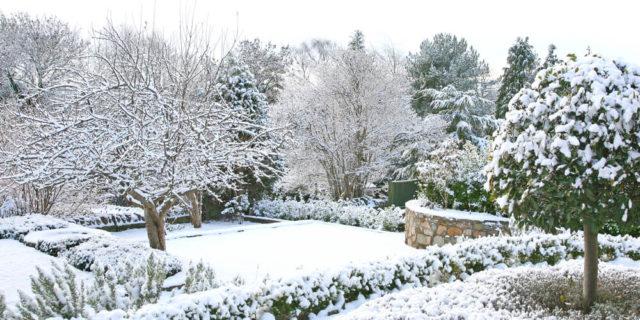 zahrada v zimě