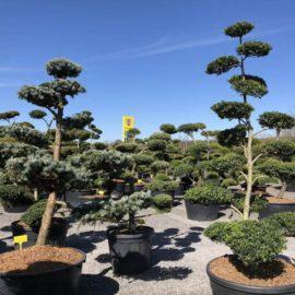tvarované stromy