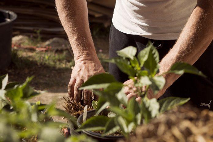 založení zahrady